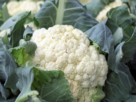 cauliflower kampos