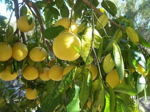 grapefruit kamposcoop