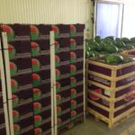 kamposcoop watermelon
